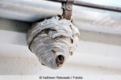 wespennest an dachrinne