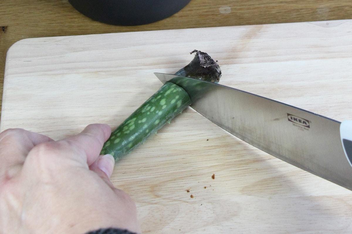 Aloe vera Gel gewinnen