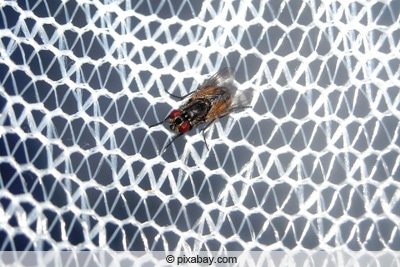 Insektengitter - Moskitonetz