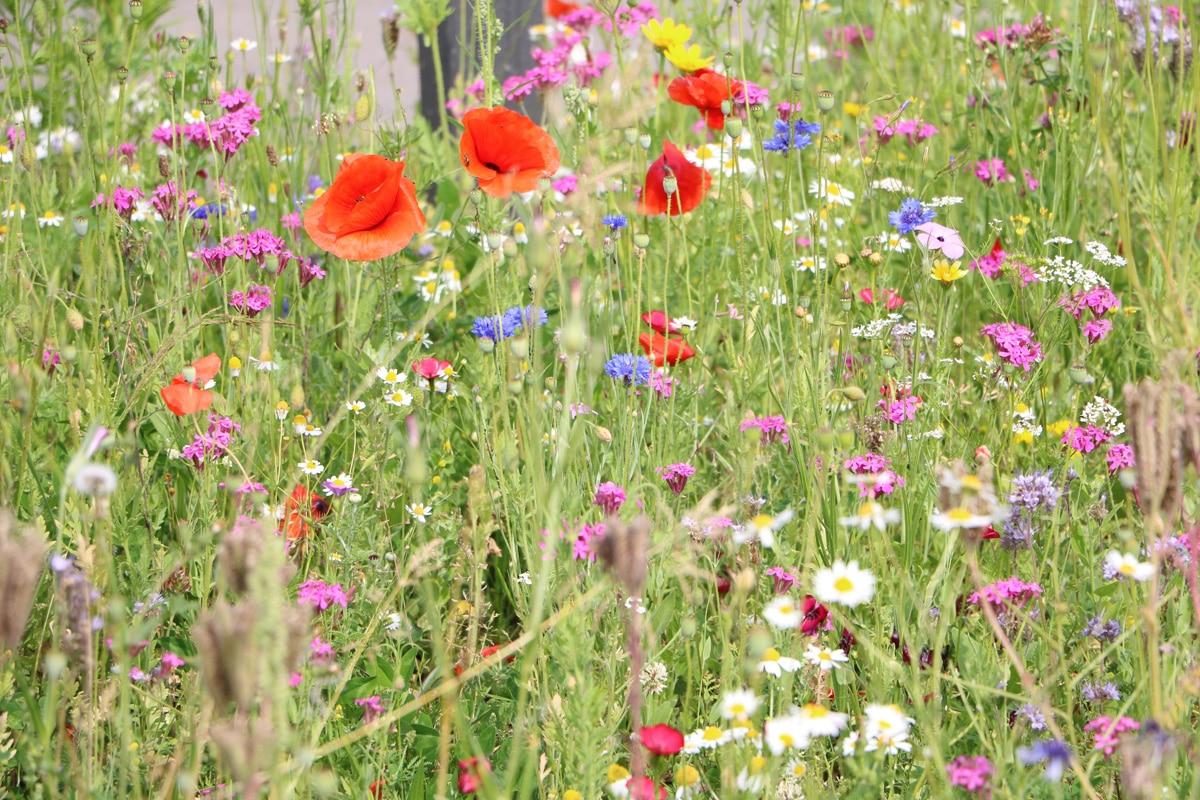 Garten insektenfreundlich gestalten - Staudenbeet