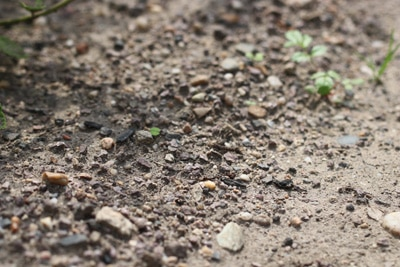 Blick auf Erdboden