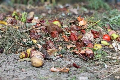 Kompost als organischer Dünger