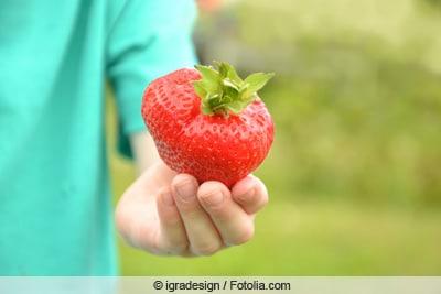 Korona-Erdbeere in Hand