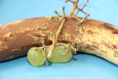 Reifes Obst