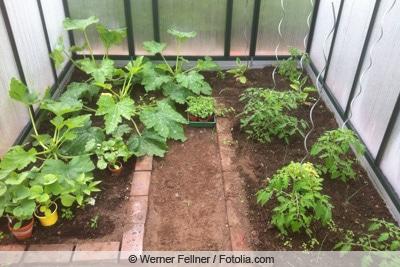 Garten-Gewächshaus mit Gemüse
