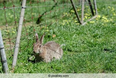 Kaninchengehege mit Maschendrahtzaun