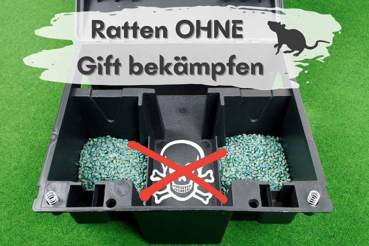 Rattenbekämpfung ohne Gift - Offene Giftbox