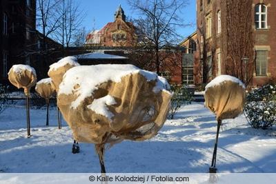 Winterschutz für Hochstammrosen