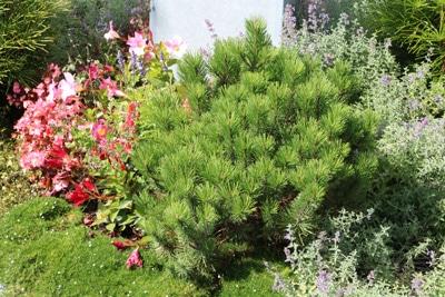 Grabbepflanzung mit Sträuchern