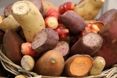 Verschiedene Kartoffelsorten in Korb
