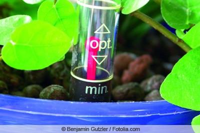 Zimmerpflanze mit Wasserstandsanzeiger