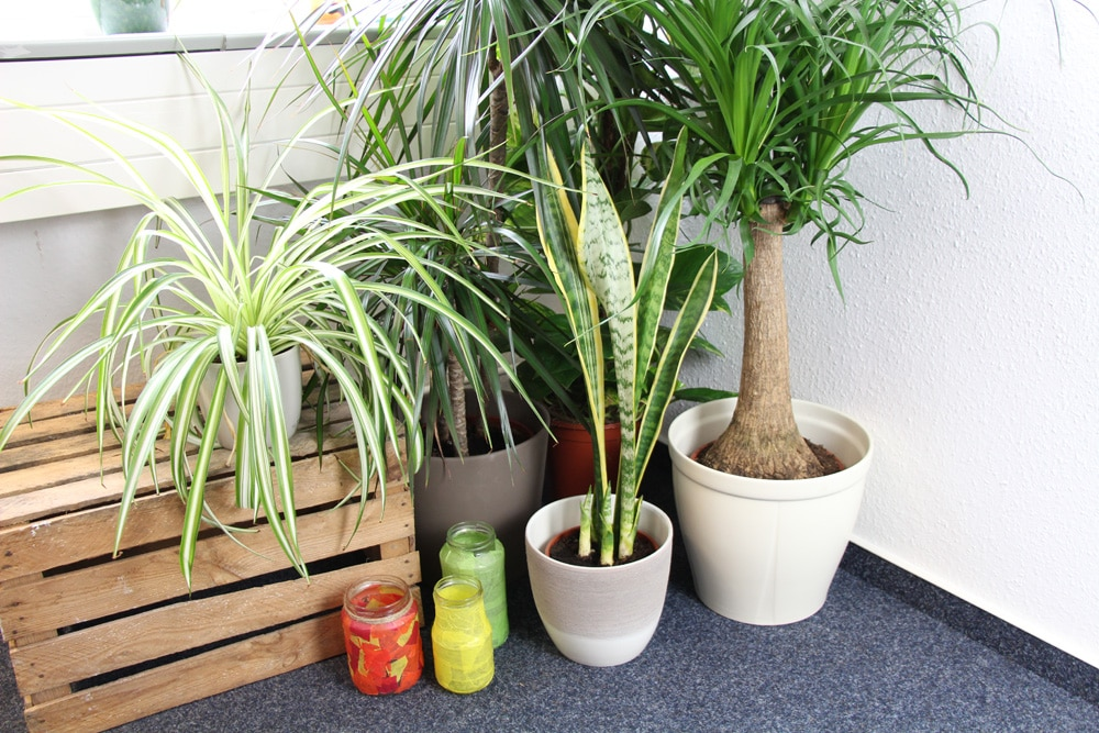 Pflegeleichte Zimmerpflanzen im Topf