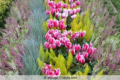 Winterliche Grabbepflanzung mit Alpenveilchen und Heidekräutern