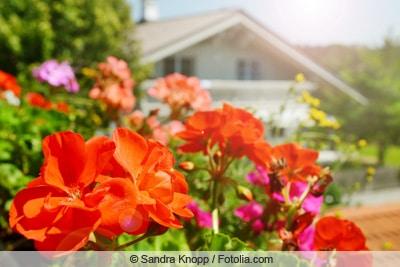 Blick auf rote Balkonblumen