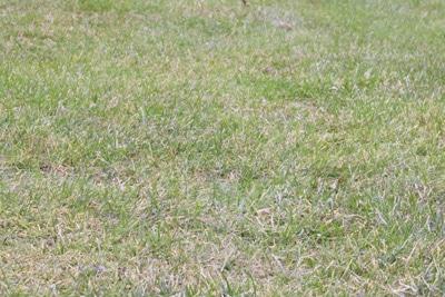 Rasenflecken So Werden Sie Braune Flecken Im Rasen Los