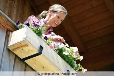 Frau pflegt Petunien im Balkonkasten