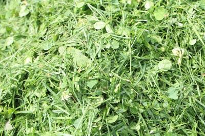 Rasenmulch auf Rasen