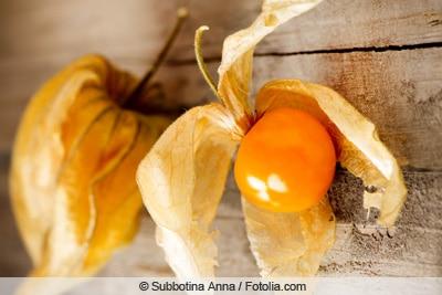 Früchte der Physalis