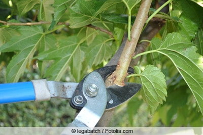 Schneiden eines Baumes