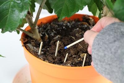 Obstfliegen vertreiben mit Streichhölzern