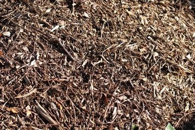 Mulch als Frostschutz