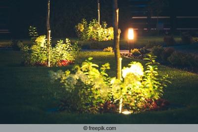 Beleuchtete Pflanzen