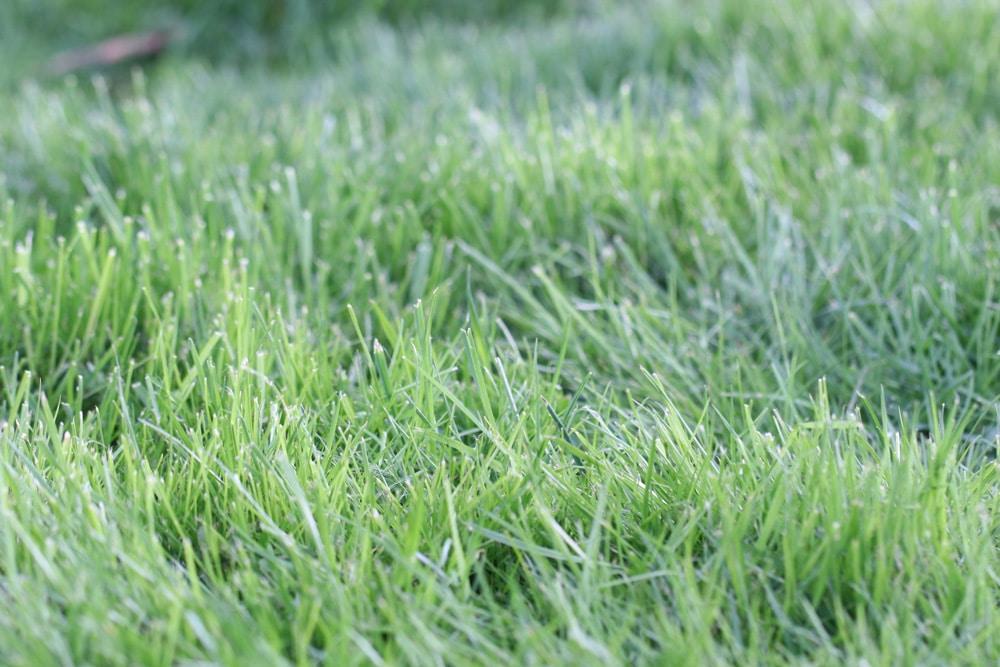 Rasen im Frühjahr