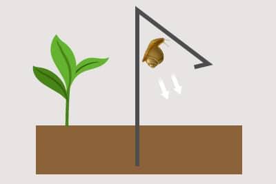 Grafik Wirkungsweise Schneckenabwehr