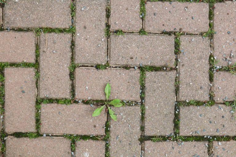 unkraut zwischen steinplatten entfernen