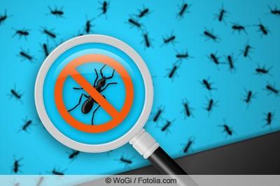 Grafik - Ameisen mit Lupe entdecken