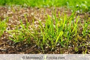 Rasen neu besäen