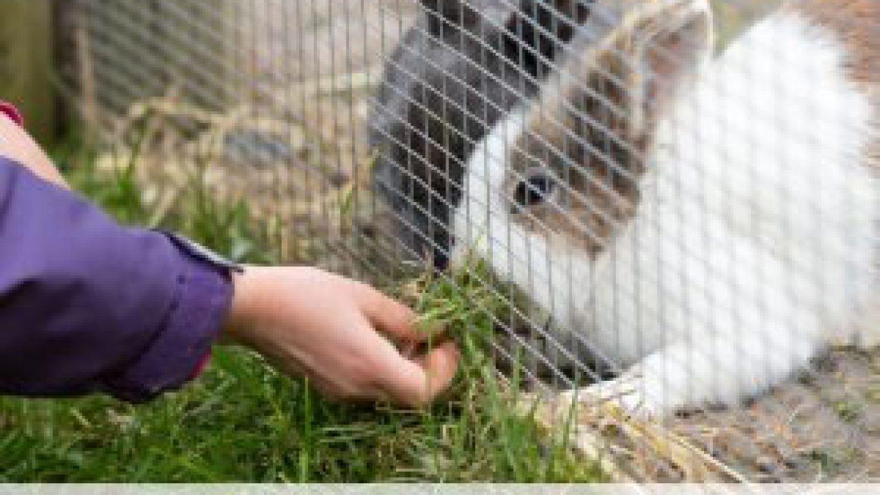 Bauanleitung Kaninchengehege Selber Bauen Gartenlexikon De