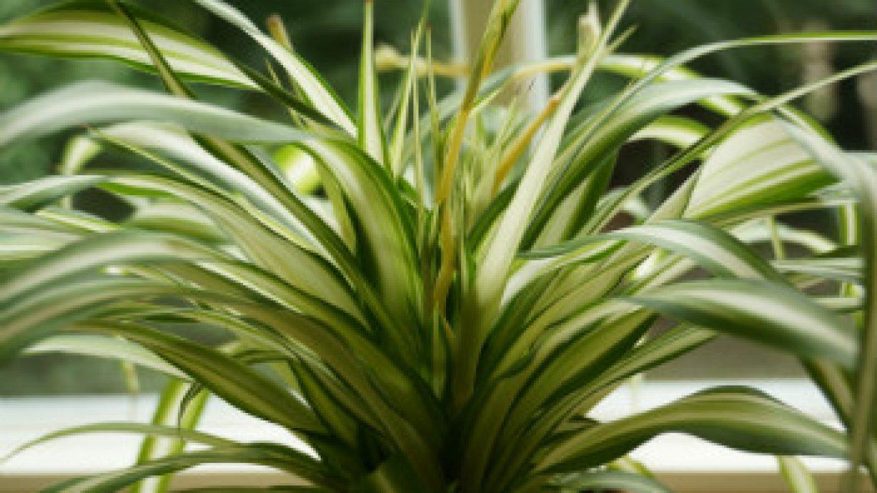 Pflanzen für das Schlafzimmer - welche Zimmerpflanzen eignen sich