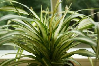 Pflanzen für das Schlafzimmer - welche Zimmerpflanzen eignen ...