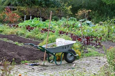 Mischkultur im Gemüse-Beet