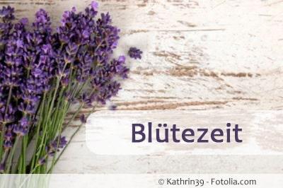 lavendel bluetezeit 89571598