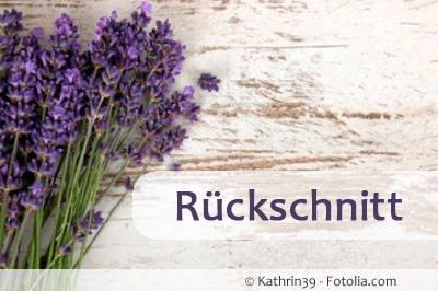 lavendel rueckschnitt 89571598