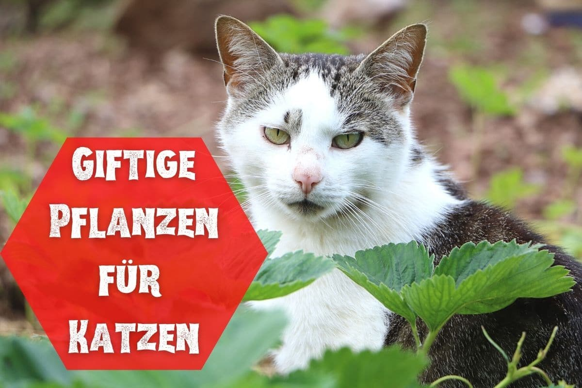 Giftige und ungiftige Pflanzen für Katzen - Liste