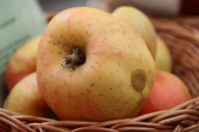 Apfelsorte Berlepsch