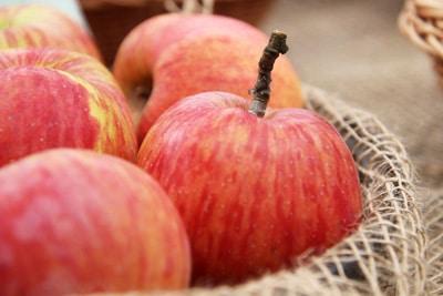 Apfelsorte Geflammter Kardinal