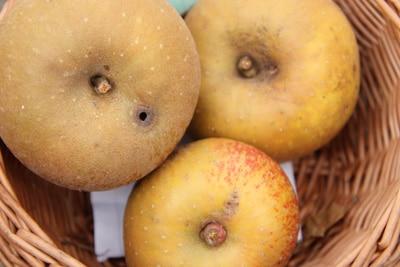Apfelsorte Schöner von Boskoop