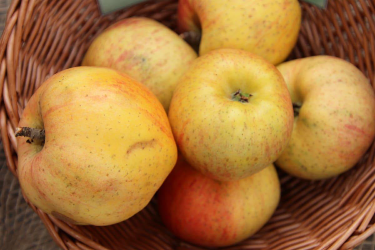 Apfelsorten 'Berlepsch'