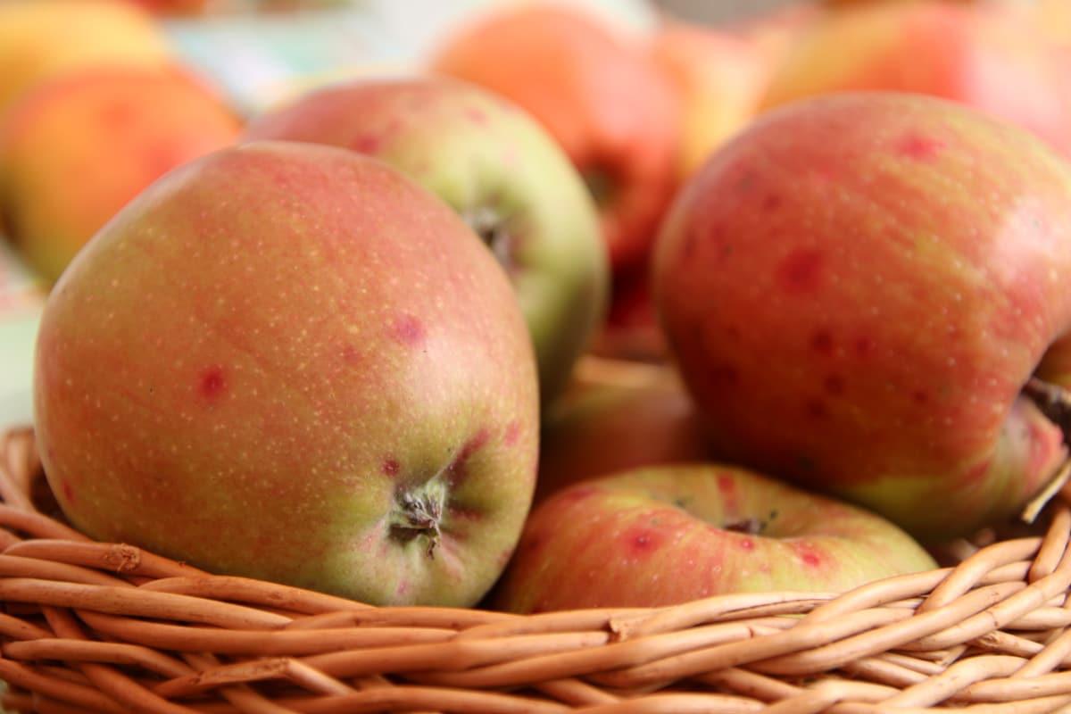 Apfelsorten 'Braeburn'