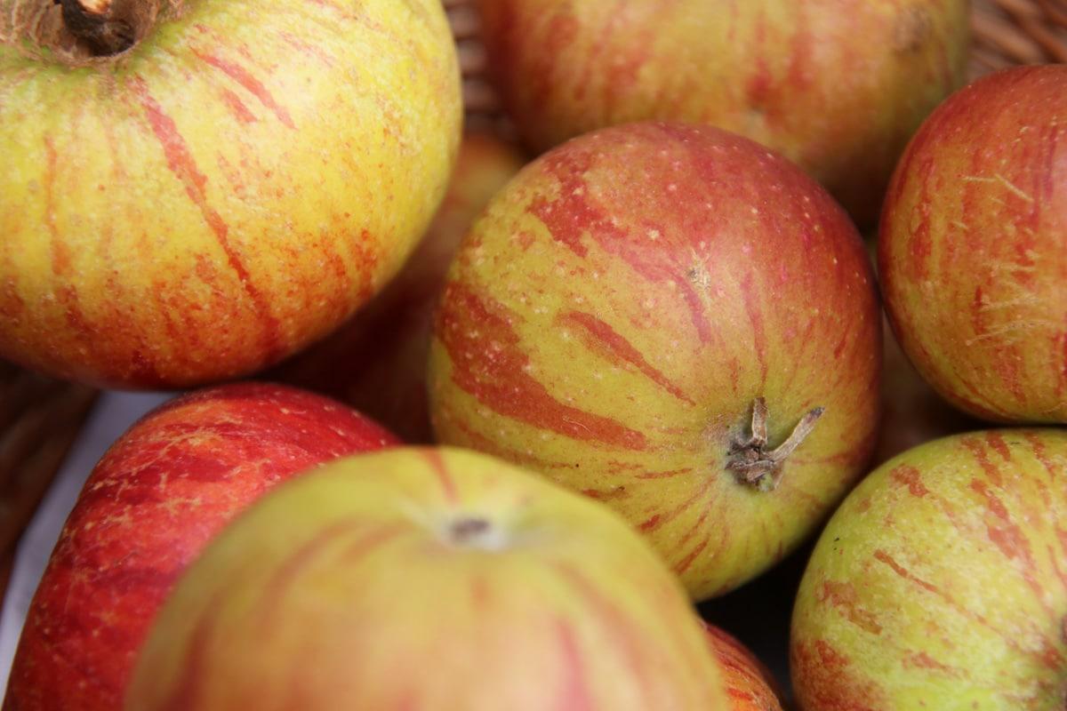 Apfelsorten - Cox-Orangen-Renette