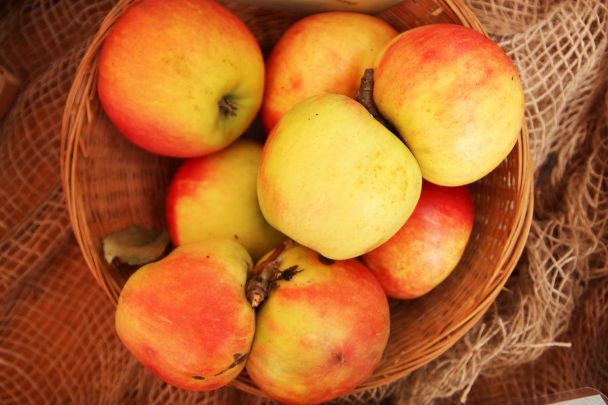 Apfelsorten 'Elstar'