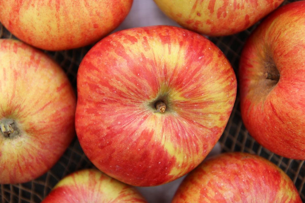 Herbstapfel - Geflammter Kardinal