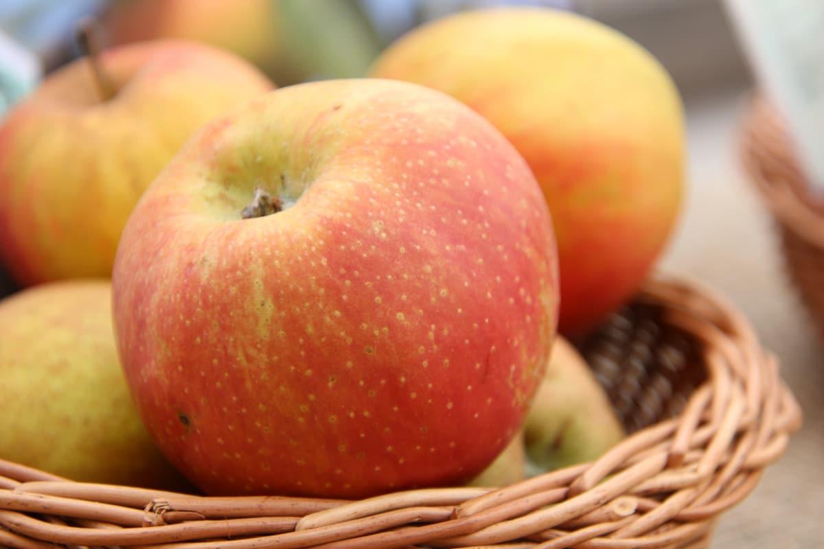 Apfelsorten 'Schöner von Boskoop'
