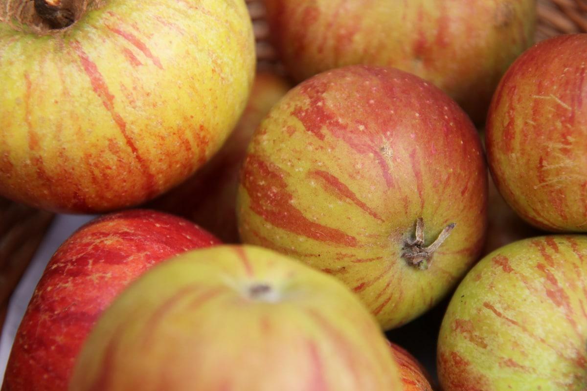 Alte Apfelsorten - Cox Orange
