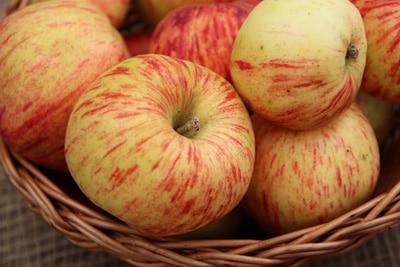 Alte Apfelsorte - Gravensteiner