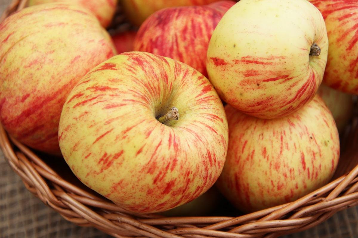 Alte Apfelsorten - Gravensteiner